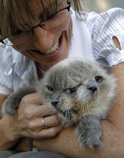 İki yüzlü kedi görenleri şok etti galerisi resim 2