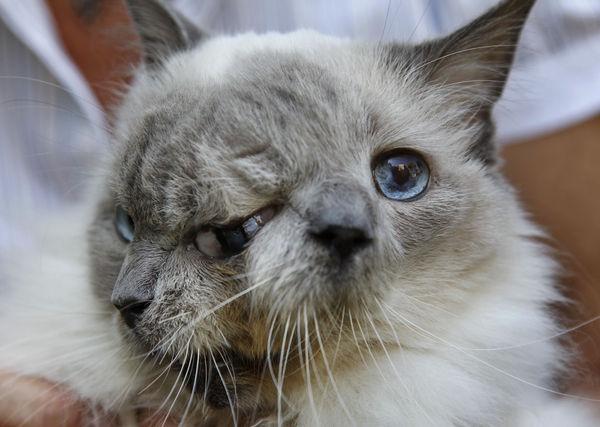 İki yüzlü kedi görenleri şok etti galerisi resim 3