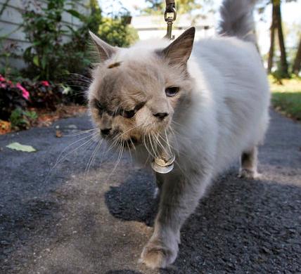 İki yüzlü kedi görenleri şok etti galerisi resim 6
