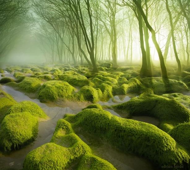 İçerisinde kaybolmak isteyeceğiniz 18 orman galerisi resim 1