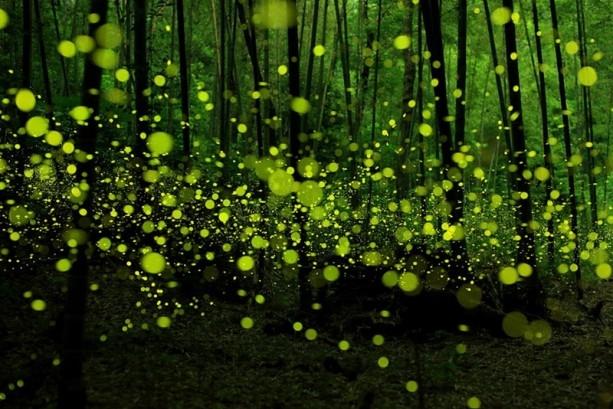 İçerisinde kaybolmak isteyeceğiniz 18 orman galerisi resim 10