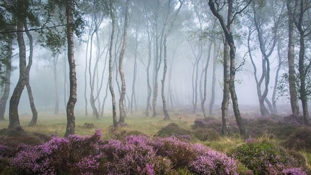 İçerisinde kaybolmak isteyeceğiniz 18 orman galerisi resim 11