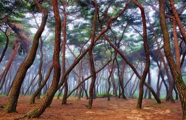 İçerisinde kaybolmak isteyeceğiniz 18 orman galerisi resim 12