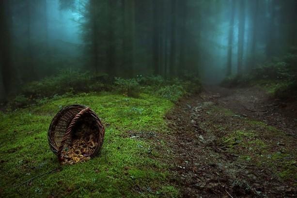 İçerisinde kaybolmak isteyeceğiniz 18 orman galerisi resim 13