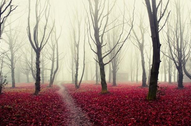 İçerisinde kaybolmak isteyeceğiniz 18 orman galerisi resim 14
