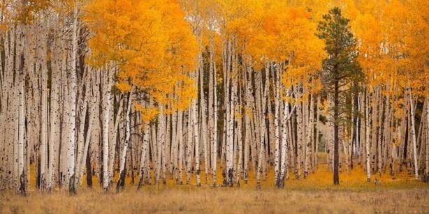 İçerisinde kaybolmak isteyeceğiniz 18 orman galerisi resim 15