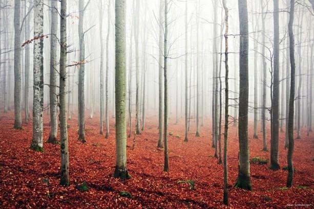İçerisinde kaybolmak isteyeceğiniz 18 orman galerisi resim 17