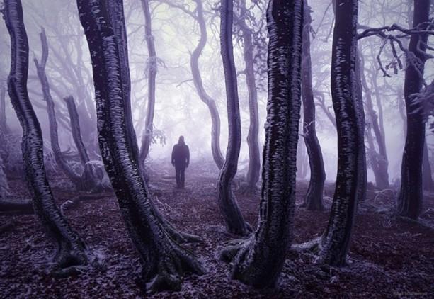 İçerisinde kaybolmak isteyeceğiniz 18 orman galerisi resim 18