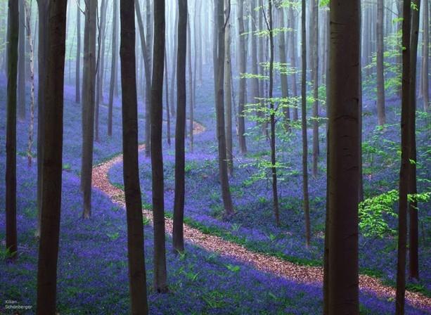 İçerisinde kaybolmak isteyeceğiniz 18 orman galerisi resim 2
