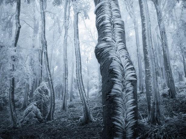 İçerisinde kaybolmak isteyeceğiniz 18 orman galerisi resim 4