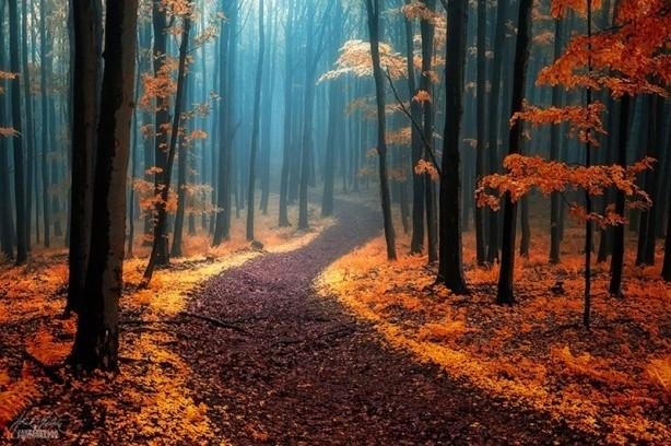 İçerisinde kaybolmak isteyeceğiniz 18 orman galerisi resim 5