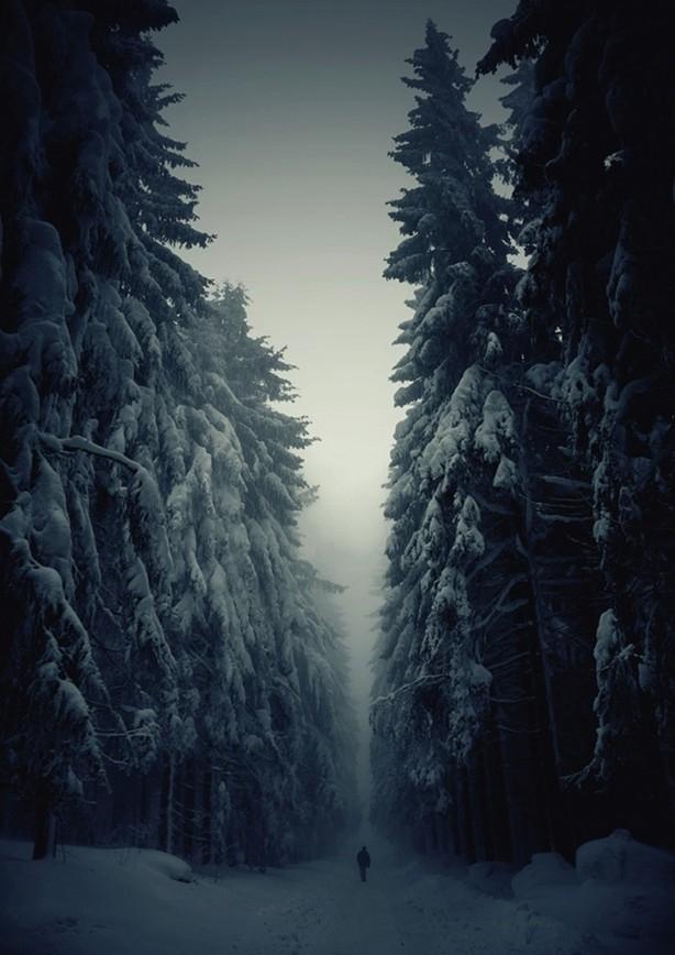 İçerisinde kaybolmak isteyeceğiniz 18 orman galerisi resim 6