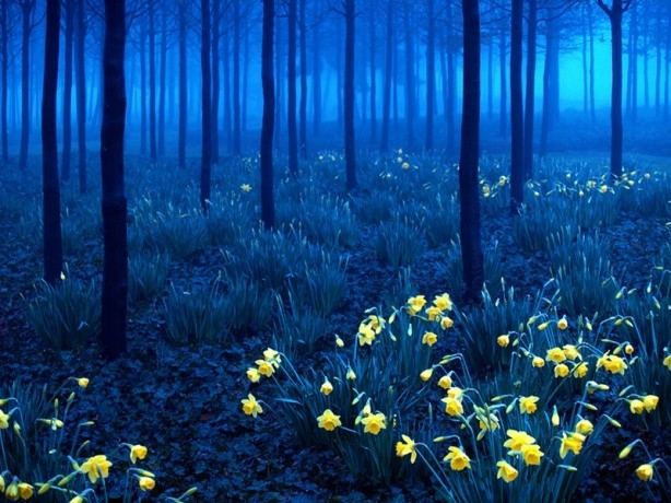 İçerisinde kaybolmak isteyeceğiniz 18 orman galerisi resim 7