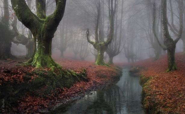 İçerisinde kaybolmak isteyeceğiniz 18 orman galerisi resim 8