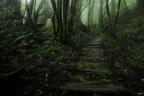 İçerisinde kaybolmak isteyeceğiniz 18 orman galerisi resim 9