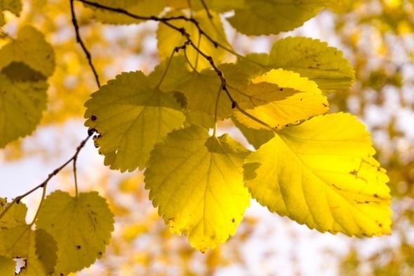 Muhteşem sonbahar renkleri galerisi resim 1
