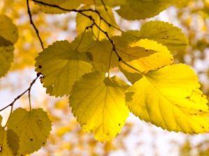 Muhteşem sonbahar renkleri