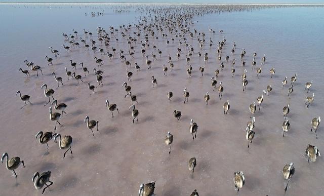 Tuz Gölü'nde yavru flamingo şöleni galerisi resim 1