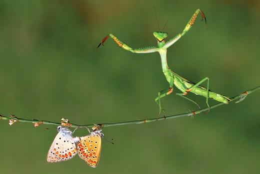 National Geographicin en iyileri galerisi resim 8