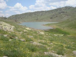 Konya'da 3 bin dönüm 2B arazisi satışa çıktı
