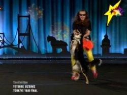 Gangnam Dansı Yapan Köpek Cash Tikla Izle