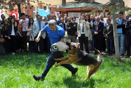 Köpeklerin eğitim gösterisine izleyicilerden yoğun ilgi