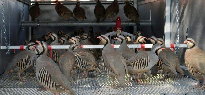 Türkiye'nin en büyük keklik üretme merkezi Konya'da kuruldu