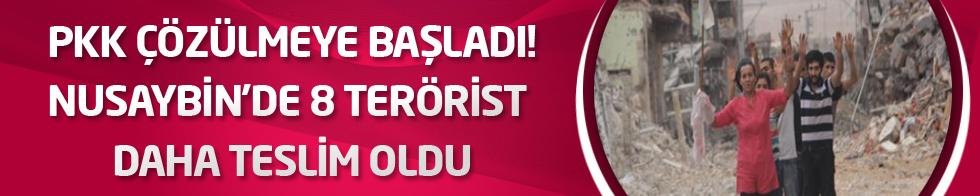 PKK Çözülmeye Başladı! Nusaybin'de 8 Terörist Daha Teslim Oldu