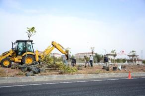 Aksaray-Konya Karayolu'na 300 Adet Ağaç Dikiliyor
