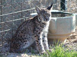 Karatay Hayvanat bahçesine yeni misafir