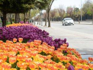 "Konya'da ""Lale Mevsimi"""