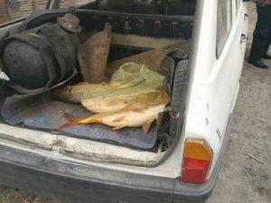 Beyşehir'de elektrik akımıyla balık avına 4 bin 650 lira ceza