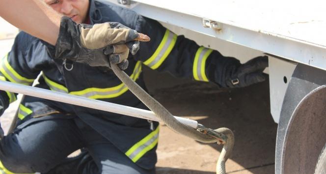 Aracına 1.5 metrelik yılan giren sürücüyü korkudan kaşıntı tuttu