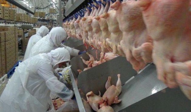 Tavuk devlerine soruşturma şoku! 19 şirket mercek altında...