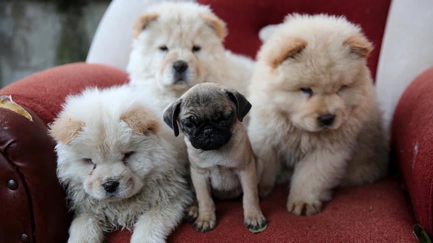 Bagajda bulunan yavru köpekler ihaleyle satılacak
