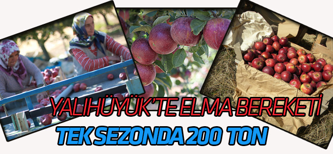 Yalıhüyük'te elma rekoltesi 200 ton