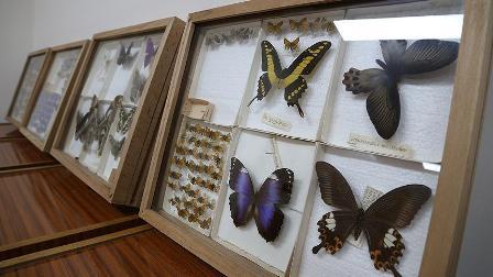 Yarım asırlık müze böcek bilimine ışık tutuyor