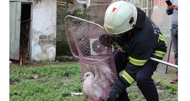Üç gündür mahsur kalan martıyı itfaiye ekipleri kurtardı
