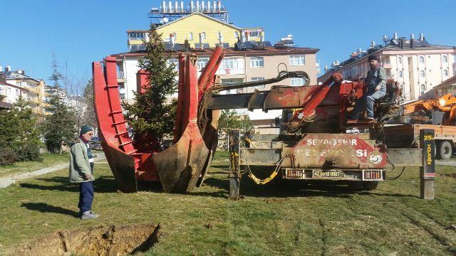 Seydişehir Belediyesinin Ağaç Duyarlılığı