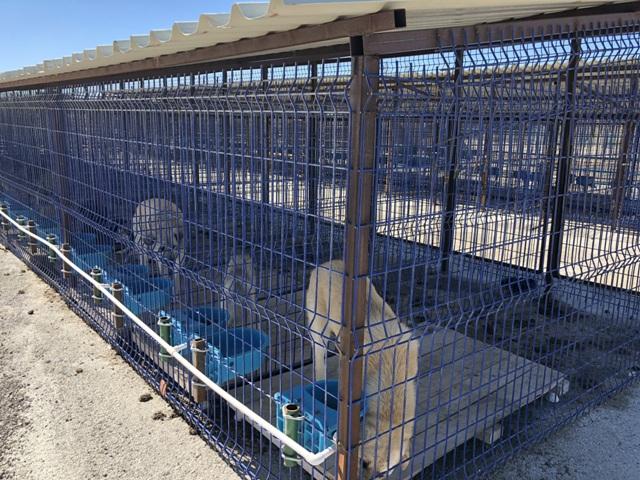 Çumra'da sokak hayvanları için barınak açıldı