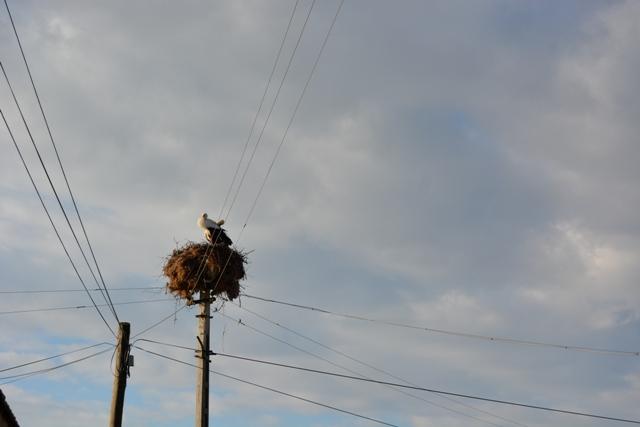 Kulu'da leylekler yuvalarına dönmeye başladı
