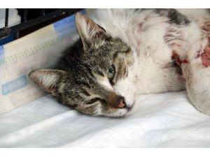 Aydın'da pitbullun kediye saldırısı güvenlik kamerasında