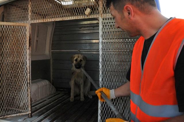 Yaralı köpek tedavi edildi