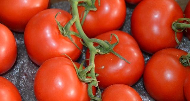 Rusya Türk domatesine yönelik kısıtlamayı kaldırdı
