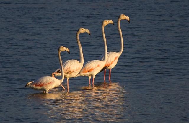 Beyşehir'de kuş akını