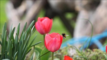 Longoz ormanlarında ilkbahar güzelliği
