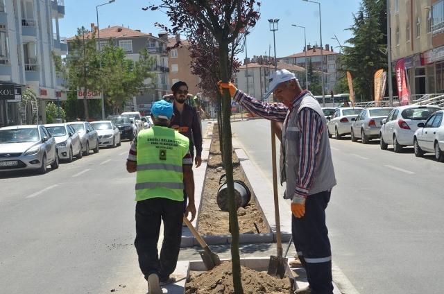 Süs eriği ağaçları estetik katıyor