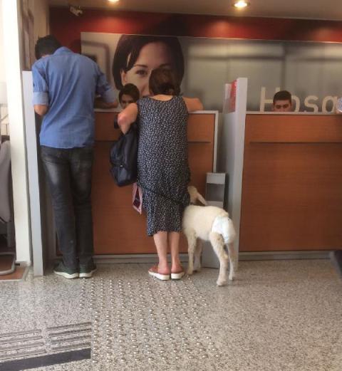 Bankaya kuzu ile geldi