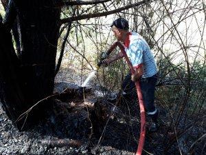 Otluk yangını ağaçlara zarar verdi
