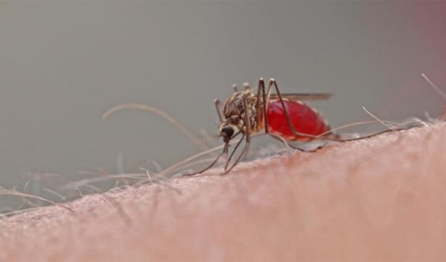 Sivrisinekler neden bazı insanları fazla ısırır?